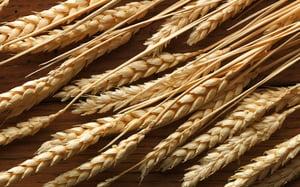Пшеничная клейковина.jpg
